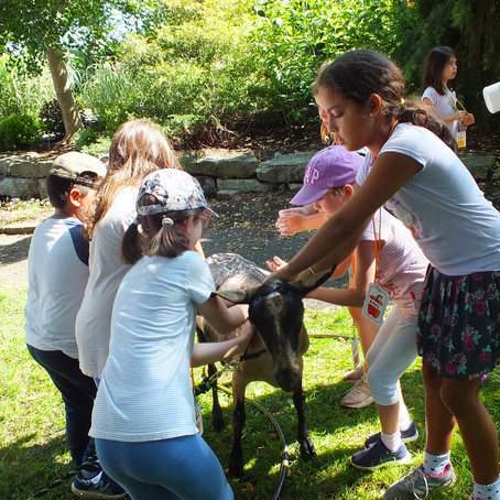 Animal Excursion Week 5 Day 2