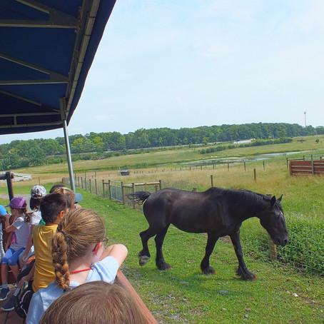 Animal Excursion Week 5 Day 1