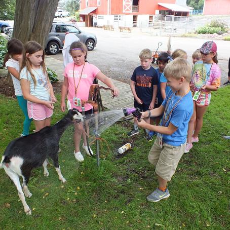 Goats n' Gardens Week 7 Day 3