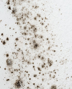 mold on a white wall.jpg