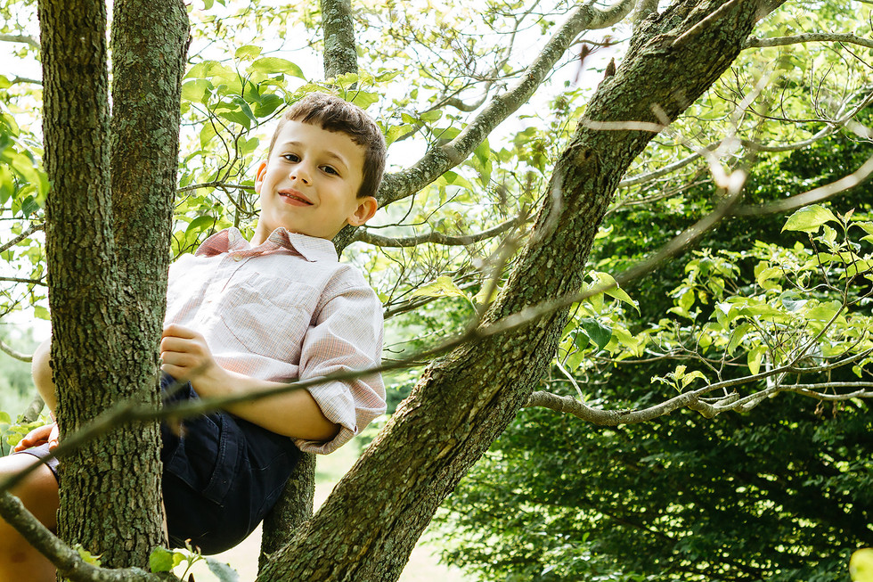 Boy in Tree Family Photography