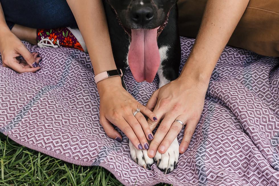 Family Dog Paw Photography