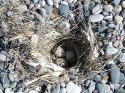 Bird nest, beach, Rhodes