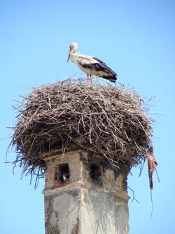 A stork nest on an ancient chimney. Village of Hărman, Romania.
