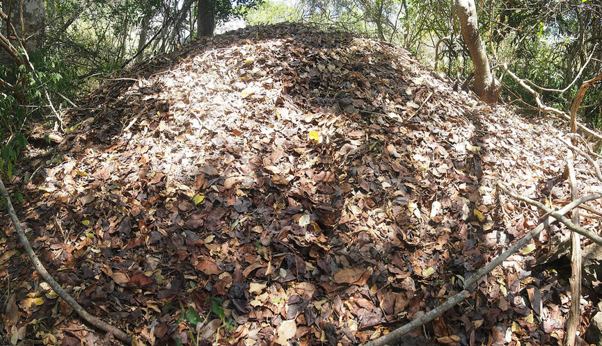 Australian Brush-turkey nest mound