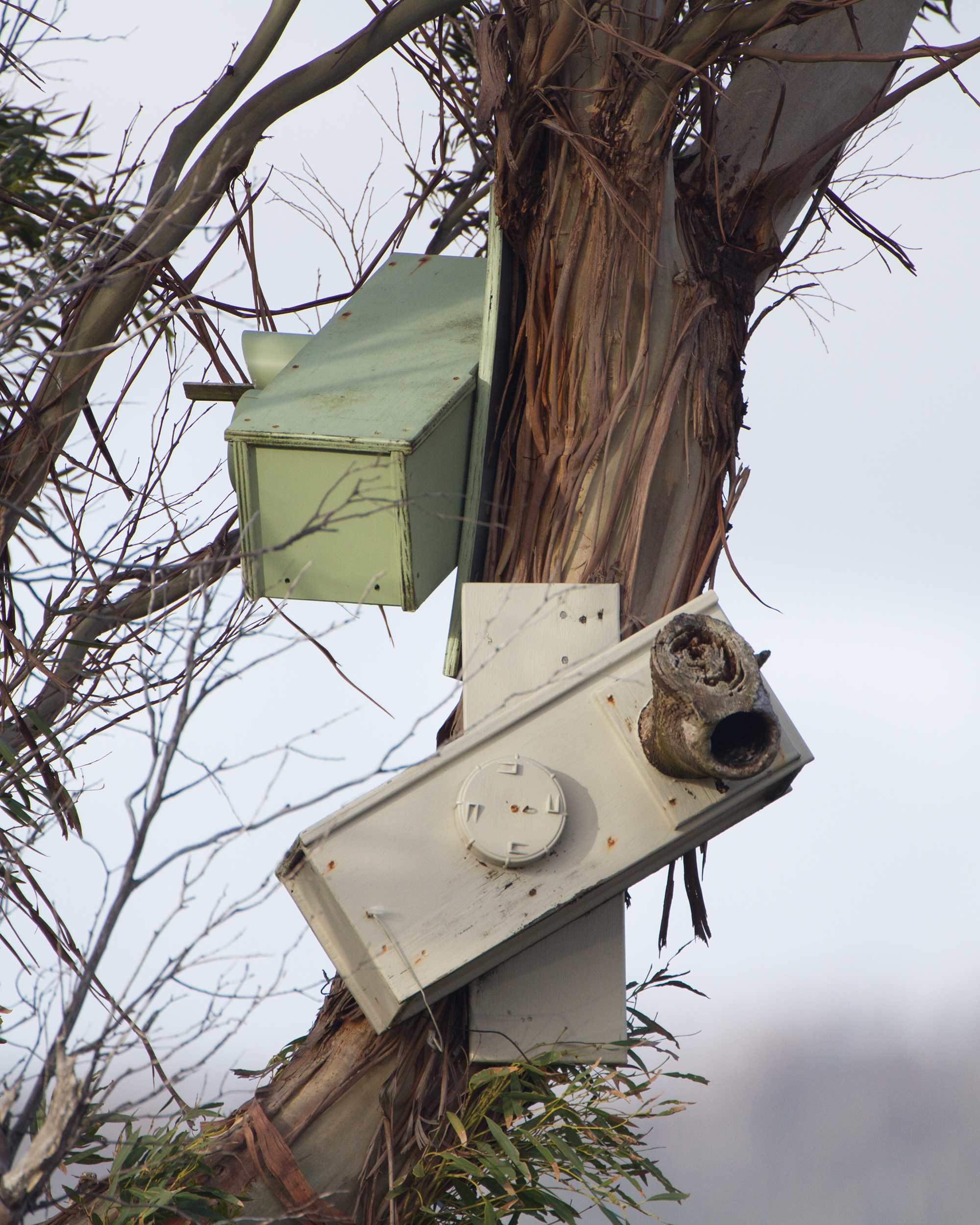 Nesting boxes intended for use by the Orange-bellied Parrot (Neophema chrysogaster)