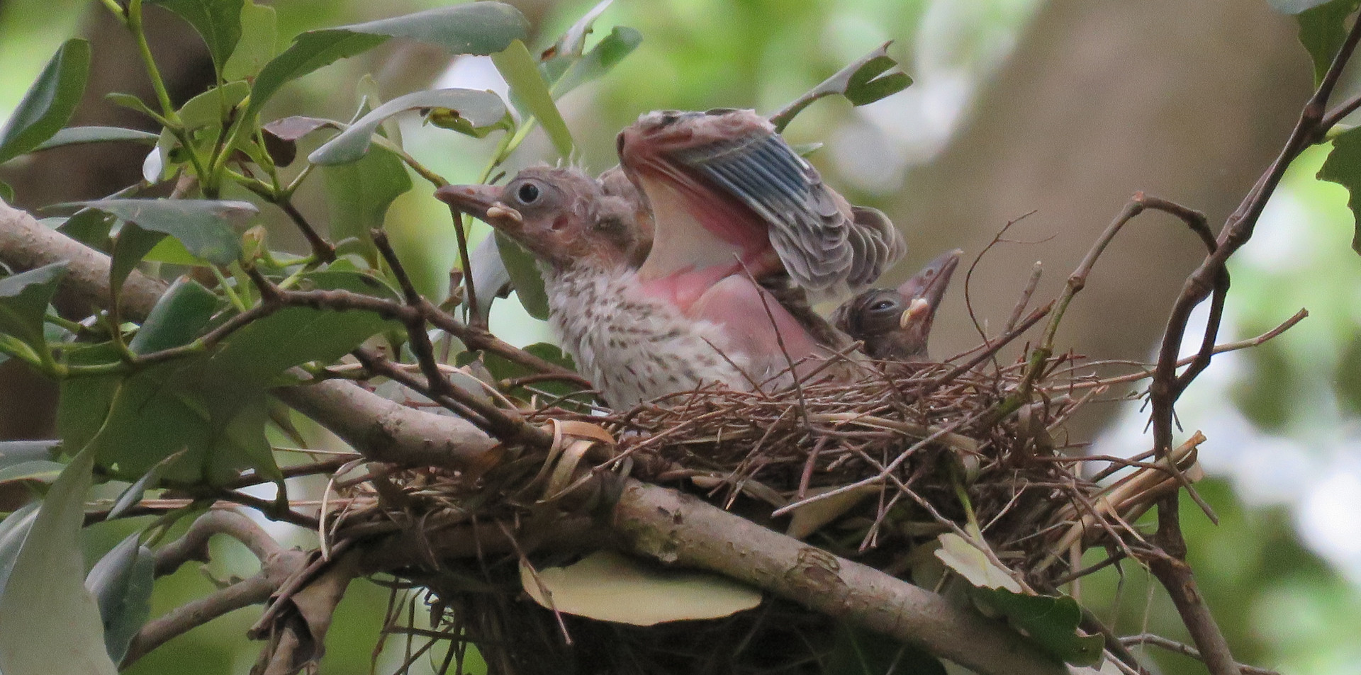 Chick in the nest