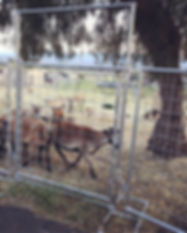 Portable Livestock Panels Photo 2.JPG