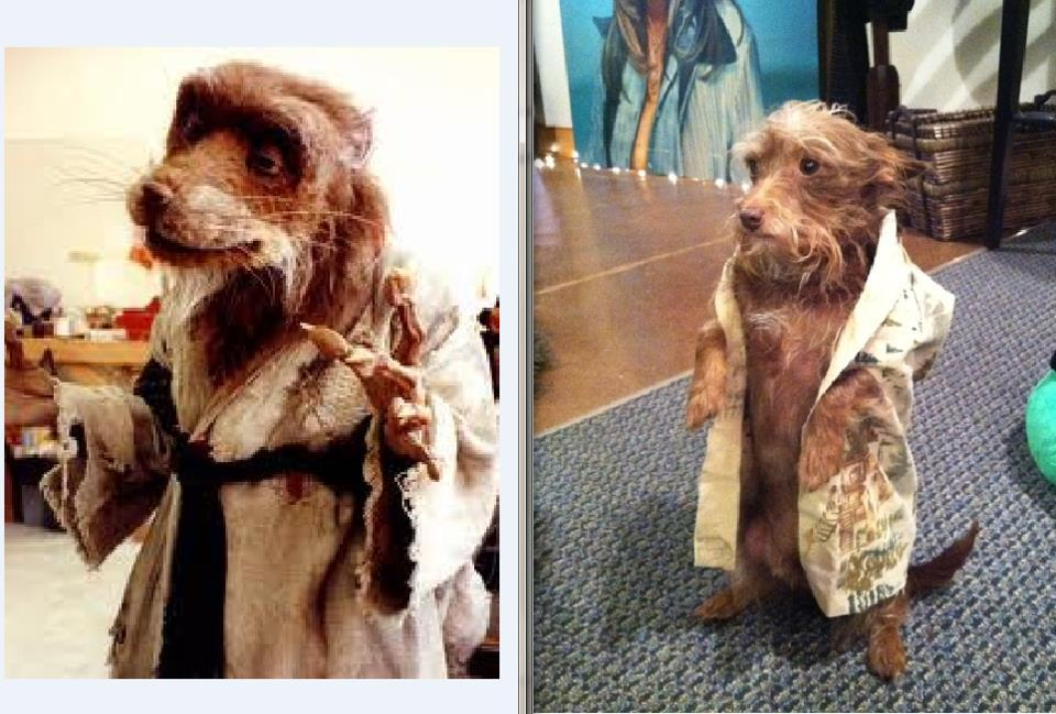 Josh as Master Splinter, Halloween.