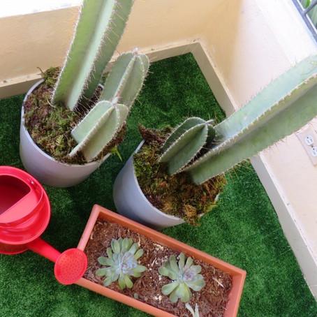 Proyecto: Urban garden by Kei