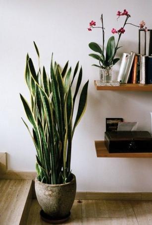 Plantas naturales para tu casa