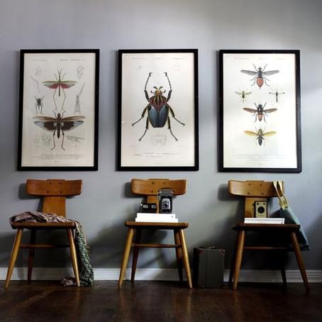 Decorar con insectos, Si o No?