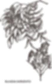 BULNESIA-SARMIENTOI.jpg