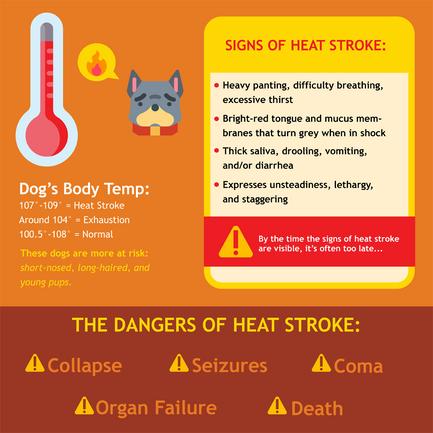 Gov-Heat_Stroke_In_Dogs.png