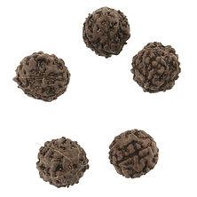 im-Perles-graines-naturelles-de-Rudraksh