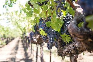 Premium Sedona Wine Tour From $65 Per Person