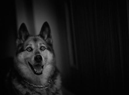 Fotografie psów