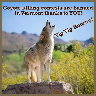 Coyote contests banned.jpg