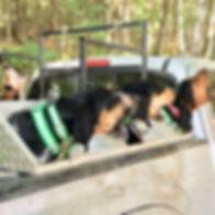 VT Bear Hounds 1.jpg