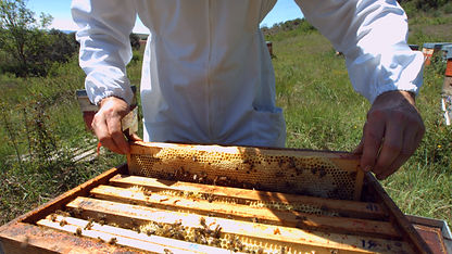 formation élevage division apiculture am