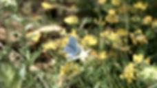Vidéo 2 v2.00_01_29_09.Image fixe026.jpg