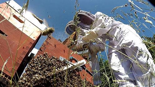s initier à l apiculture