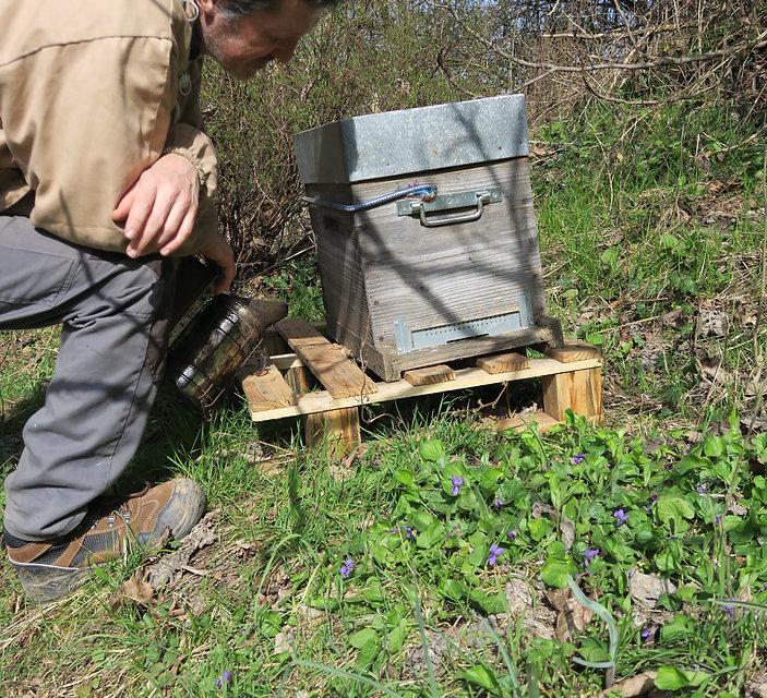observer apprendre évelage ruche abeille