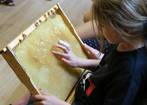 découverte abeilles enfant aveyron