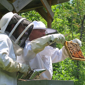 stage initiation apiculture