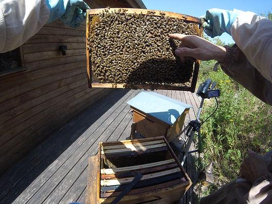 experience abeille cadeau sud aveyron oc