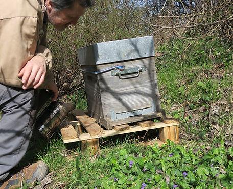 apprendre abeilles ruches bio