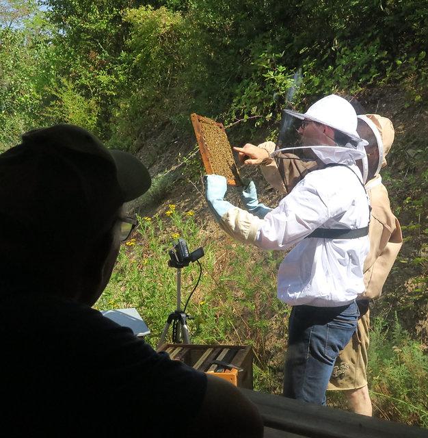experience vip apiculture bio occitanie.