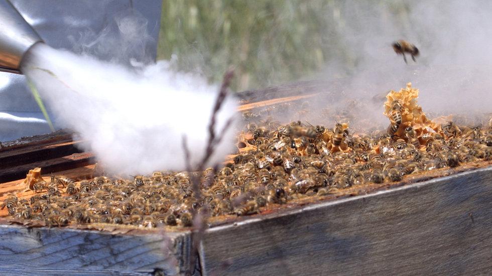 débuter en apiculture bio
