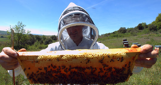stage apiculture bio aveyron