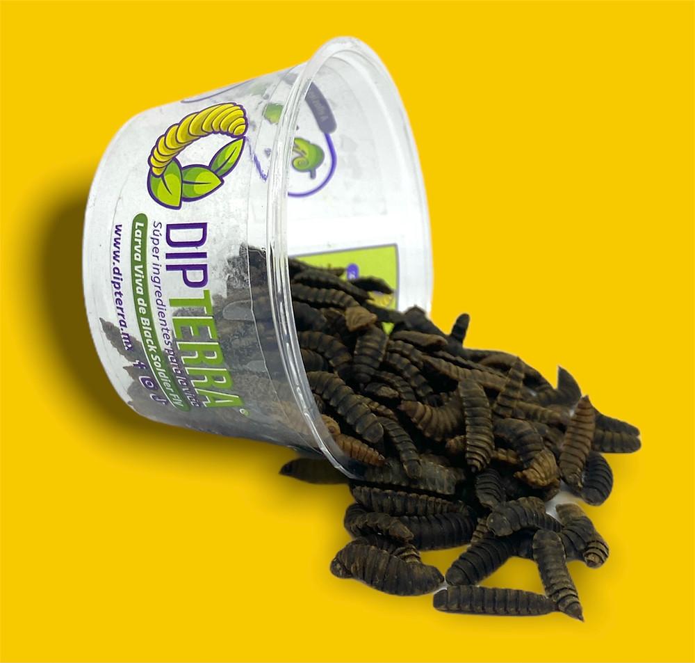 Alimento Vivo Premium para reptiles, peces, aves y animales exóticos