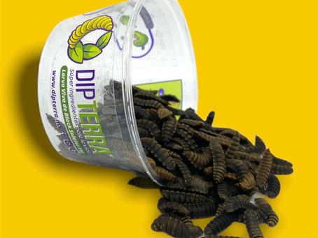 5 tips que te ayudaran a conservar tus larvas de black soldier fly