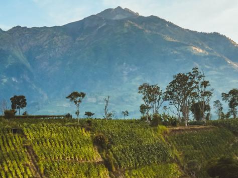 High altitude grapes give wine high attitude