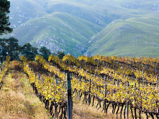 How does altitude affect wine?