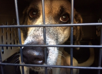 Four Legged Victims of Hurricanes get a Second Chance