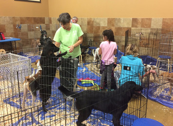 Lori Jerusik: Dog Rescuer from Chicopee, MA is in it for the Long Haul