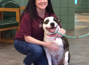 Ins & Outs of T.J. O'Connor Animal Control and Adoption Center