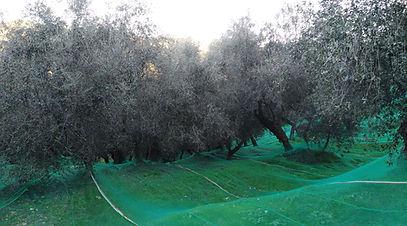 Valle di Dolcedo, Italia. Antiguo sistema de cosecha
