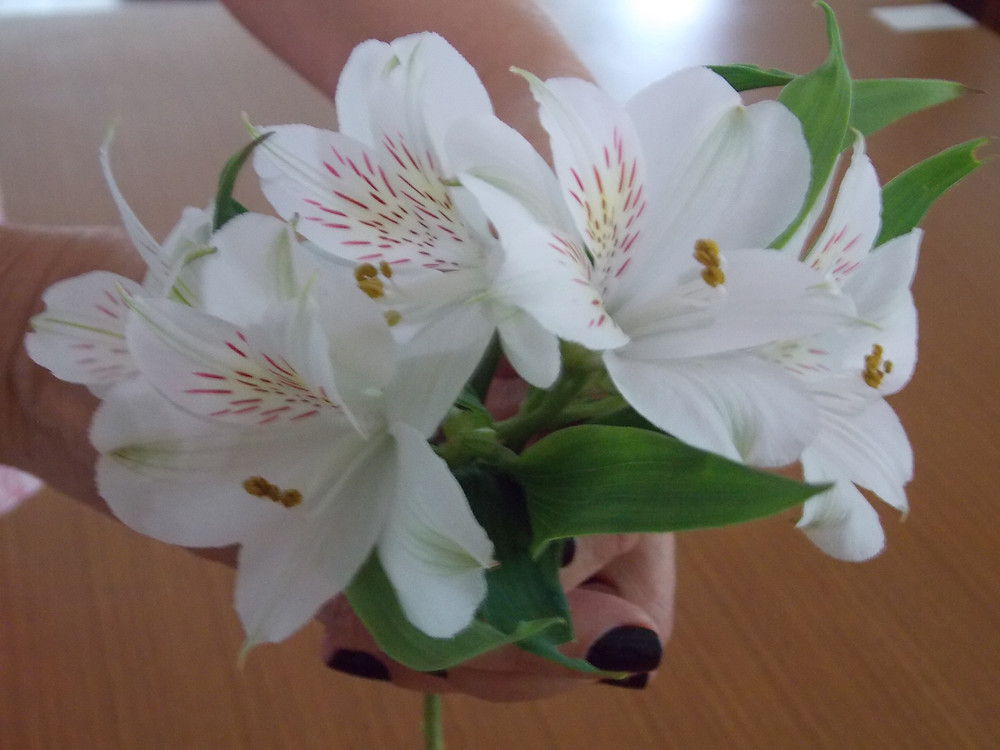 Alecrim | Feito a mão | Terapias naturais |Meditação | Florais | Reiki