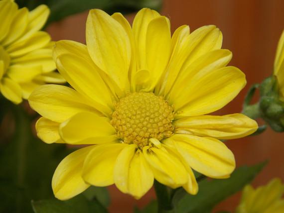 Flores Niver Afilhados | 5 anos de muita felicidade