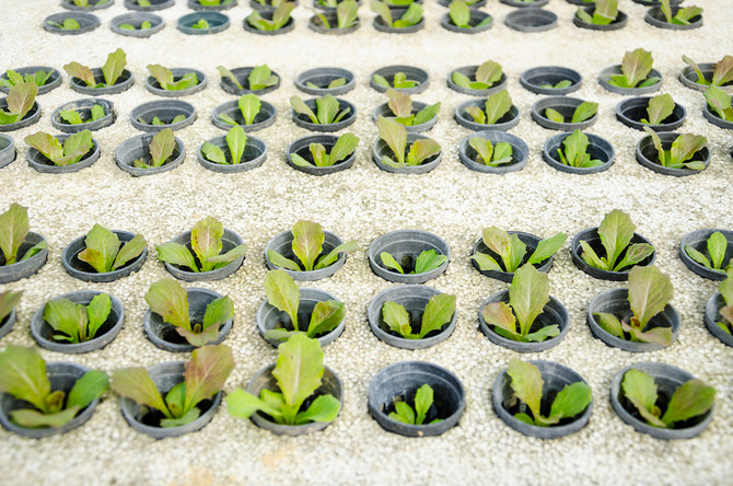 A Short Guide to Hassle-Free Hydroponic Systems