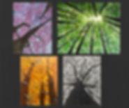 Seasons with Trees.jpg