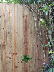 Fixed damaged section of the pool fence