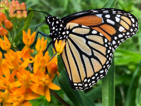 Natural History magazine covers our Pollinator Pathway