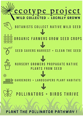 Ecotype Project_ Pollinator Pathway  (1)