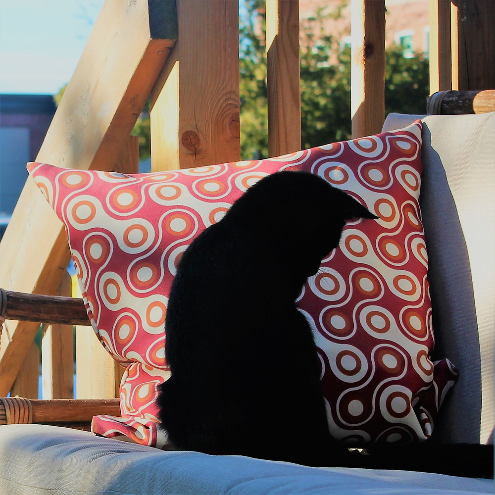 A cat 'so black' she appears as a 'profile cut out' against a pillow.